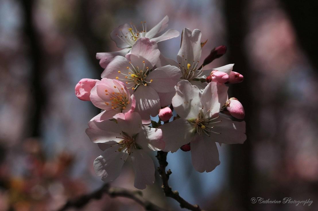 Wild flowers in Midland,England